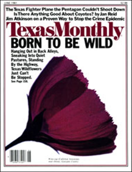 June 1981 issue cover